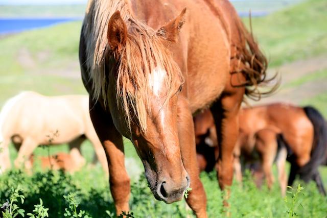 south dakota cowgirl photography, south dakota horses, south dakota ranching, equine photos, horses in a natural setting, spring