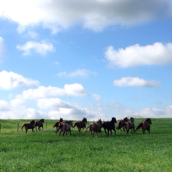 ranching, south dakota cowgirl photography, south dakota, horses, ranch horses, running horses