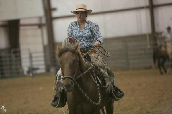 hackamore horse