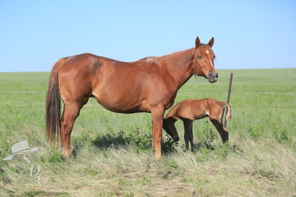 south dakota cowgirl photography, equine photography, equine photos, foal photos, pictures of baby horses