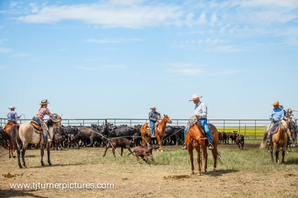 tj turner photography, the dx ranch, south dakota, south dakota ranches, ranch life
