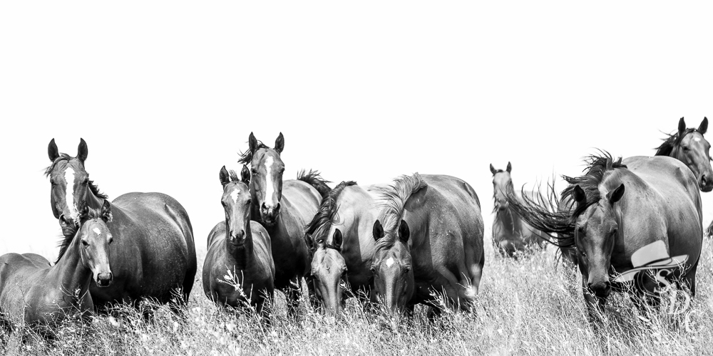 south dakota cowgirl photography, horse photography, equine photography, black and white equine images