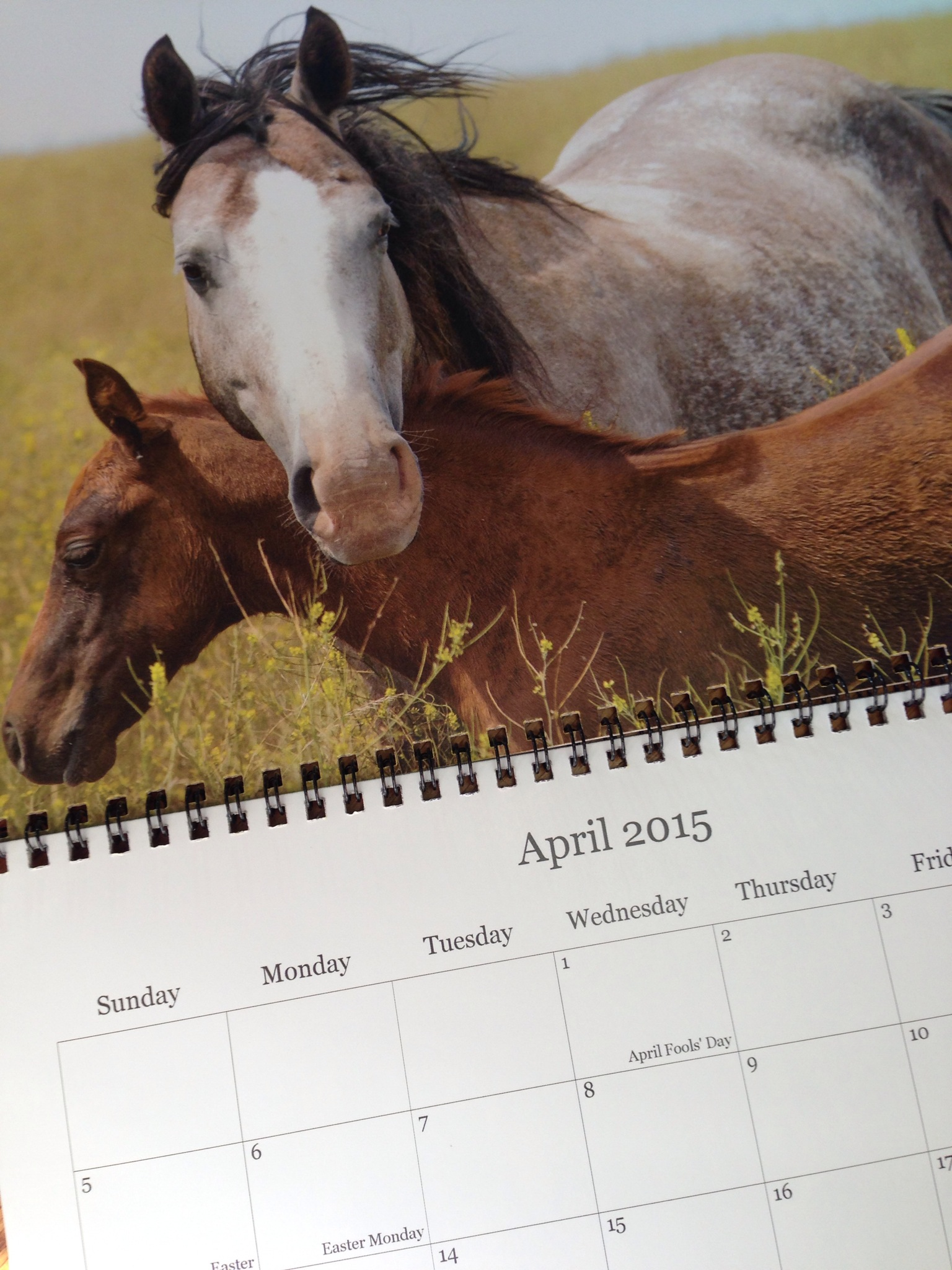 Mare and Foal 2015, SDC Calendar, SDC Photography, south dakota cowgirl photography