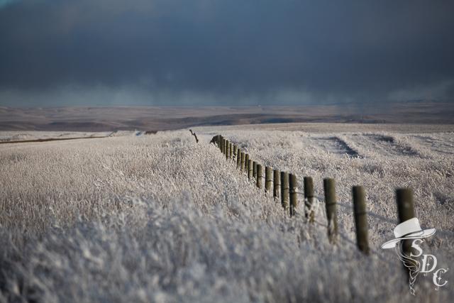 south dakota cowgirl photography, photography tutorial, camera settings, winter, ranch