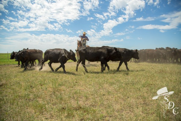 ranching, south dakota cowgirl photography, ranch life, buckaroo, ranch roping, big loop roping