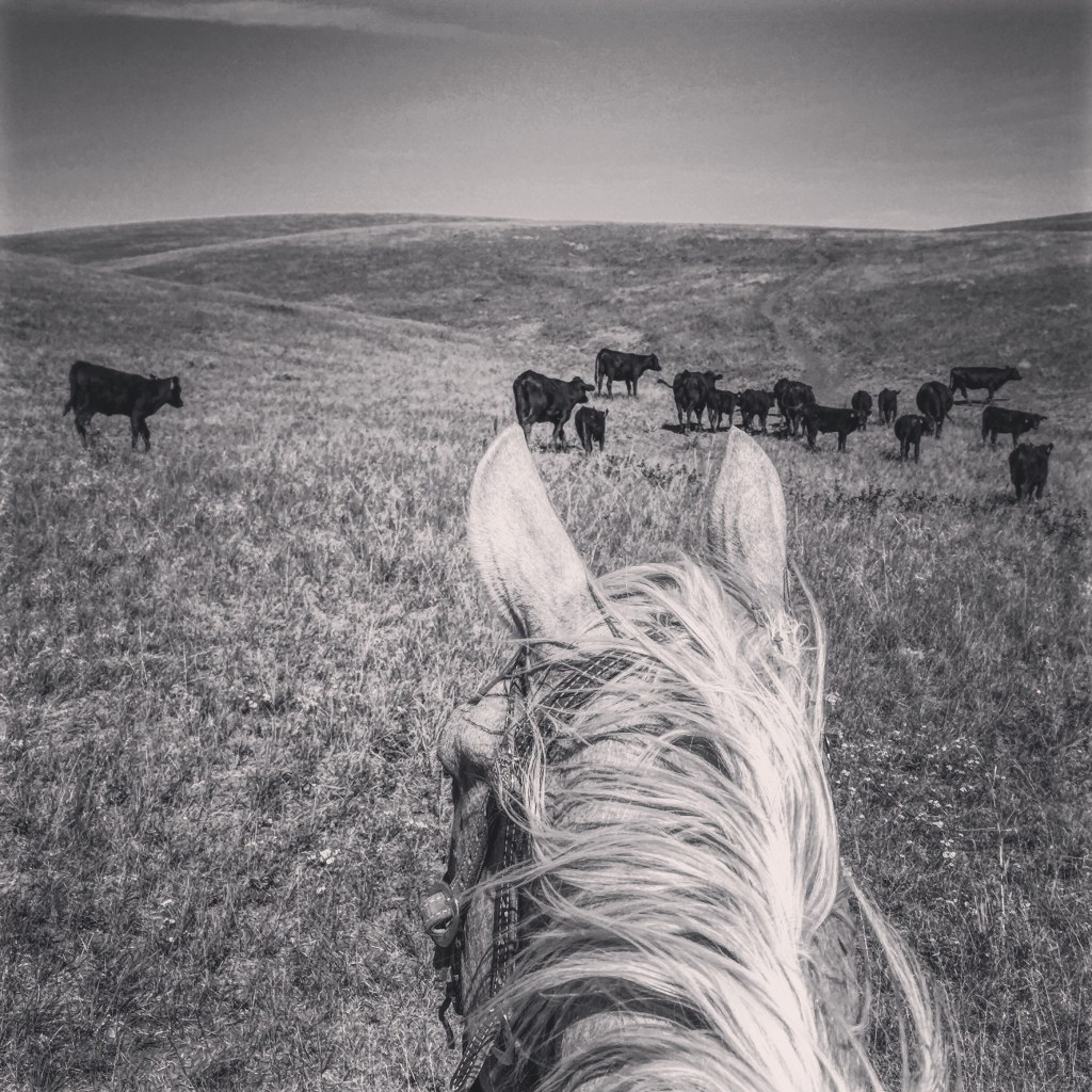 I spend a great deal of time looking between the ears of a horse.