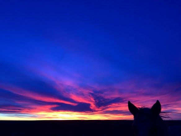 sunset, south dakota cowgirl photography, the south dakota cowgirl, horses, life between the ears, ranch life