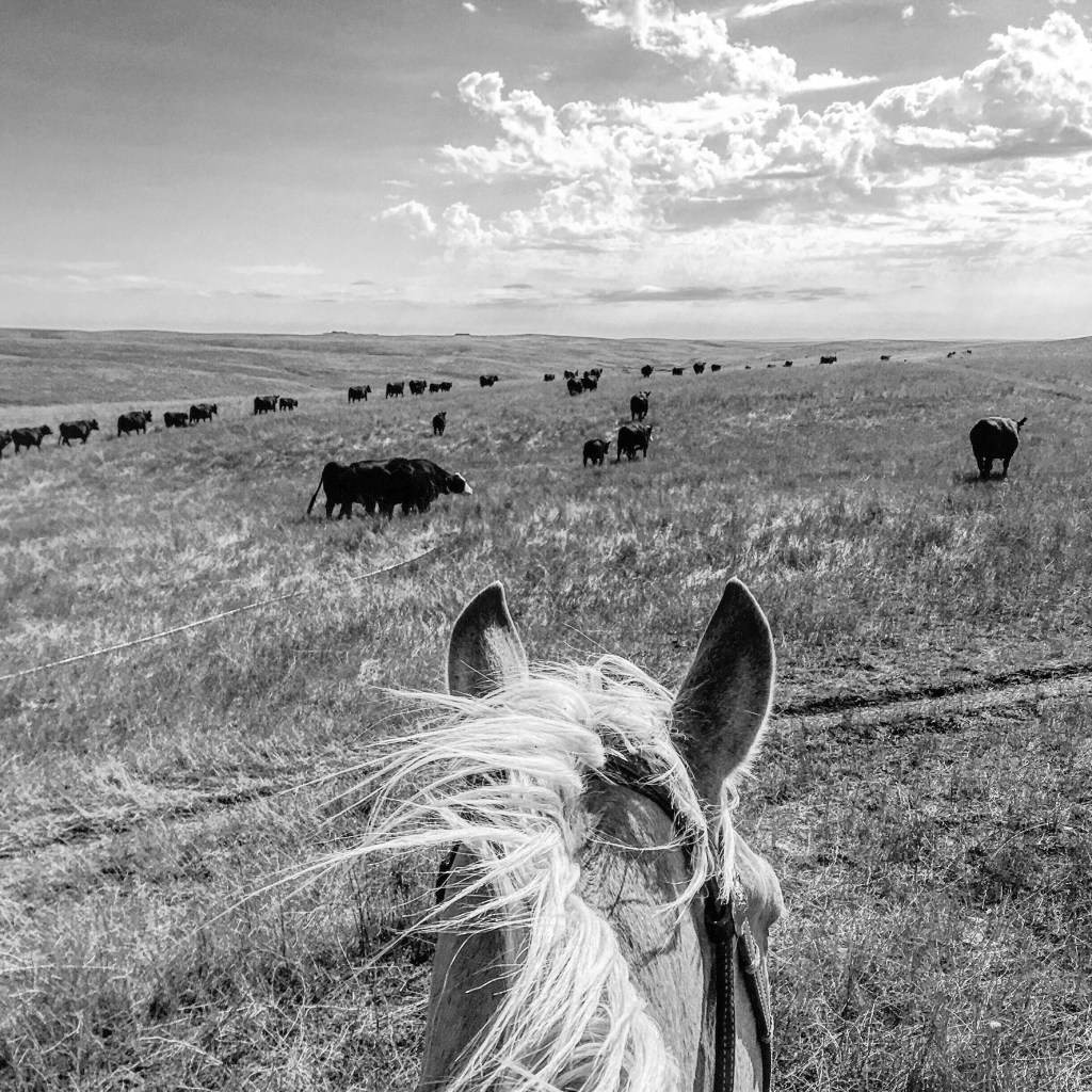 life between the ears, south dakota cowgirl photography