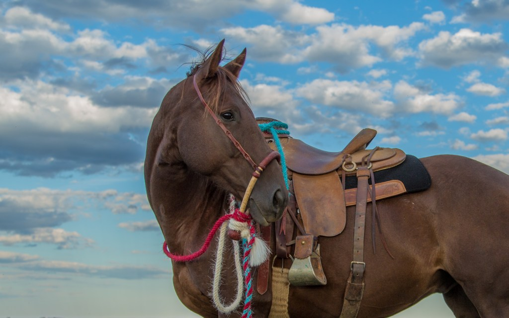 The South Dakota Cowgirl, south dakota cowgirl photography, the dx ranch, hackamore horse, quarter horse