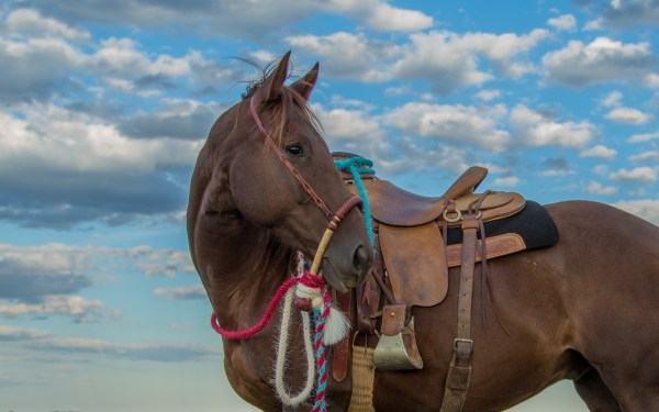 The South Dakota Cowgirl, south dakota cowgirl photography, the dx ranch, hackamore horse, quarter horse, mecate reins, mecates, handmade, colorful cowgirl reins