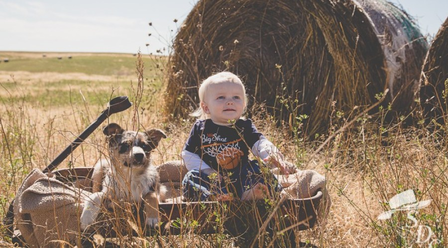 south dakota cowgirl photography, fall, one-year photos, toddler, heeler, border collie, dog and baby photo
