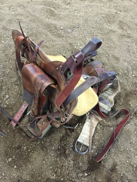 Chas Weldon, horsemanship, colt starting, horses