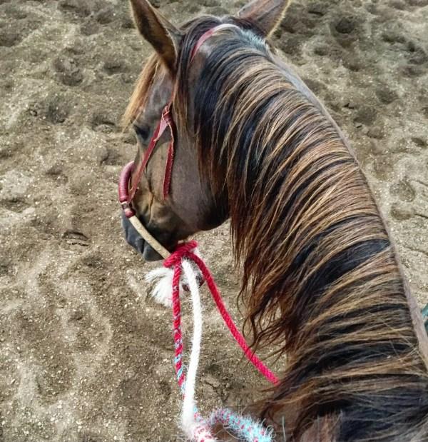 buck clinic, riding with buck, horsemanship, hackamore horse