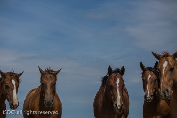 Sometimes even on the ranch you need a nap. These broodmares are no exception.