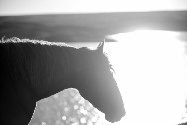 Pretty Light, South Dakota Cowgirl Photography, black and white, horse