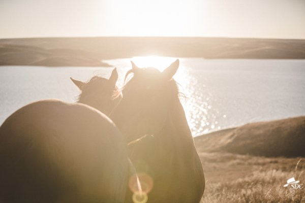 pretty light, south dakota cowgirl photography, I'll scratch your back if you scratch mine