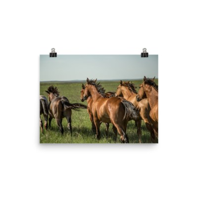 """""""Trot on Boys"""" Color Photo paper poster"""