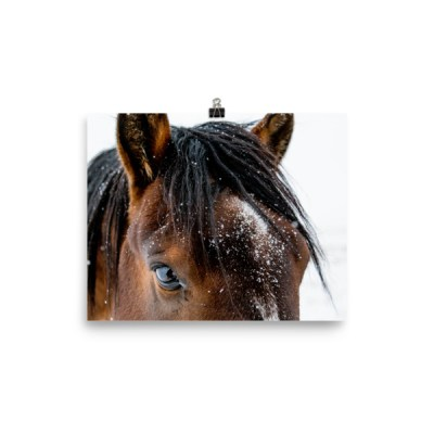 """Fuzzy Forehead"" Photo Paper Poster"