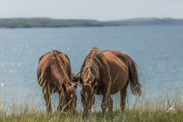 ten things to love about ranch life, south dakota cowgirl, south dakota cowgirl photography, horses in summer, ranching, horses on a ranch