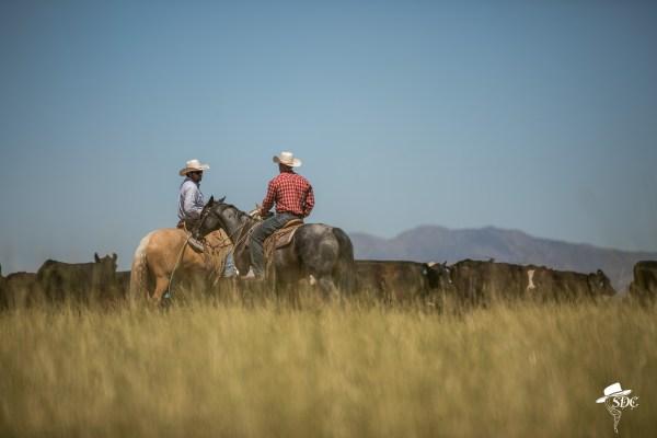 Utah cowboys, discuss life during the Chris Dickinson Photography Workshop in SLC Utah, June 2017.