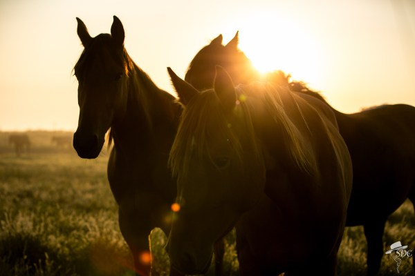 it's been a hot minute, into the sunrise, the south dakota cowgirl, south dakota cowgirl photography, equine photography