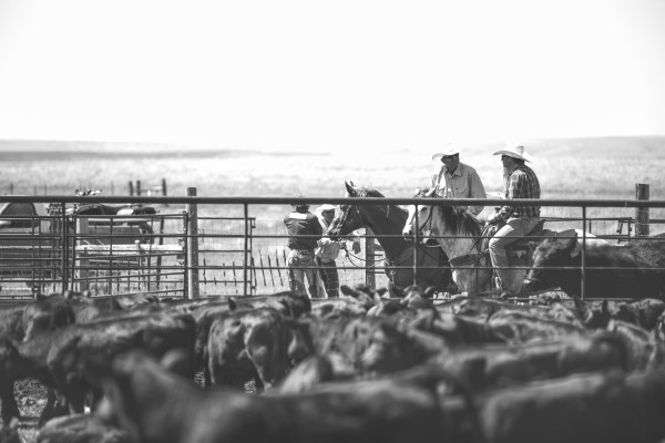 it's been a hot minute, black and white, cowboys, ranching, ranch life, the south dakota cowgirl, south dakota cowgirl photography, equine photography