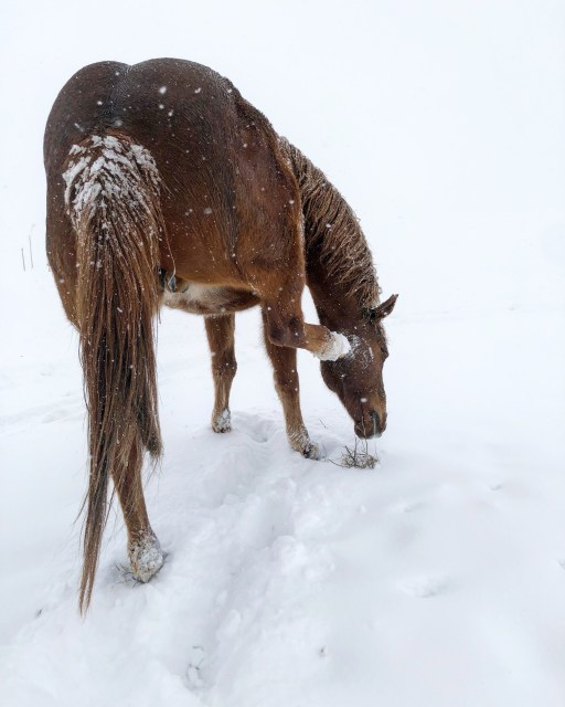 horses in snow, magical snow, life on the ranch, winter, the south dakota cowgirl