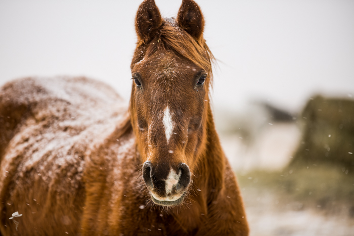 the south dakota cowgirl, south dakota cowgirl photography, winter images