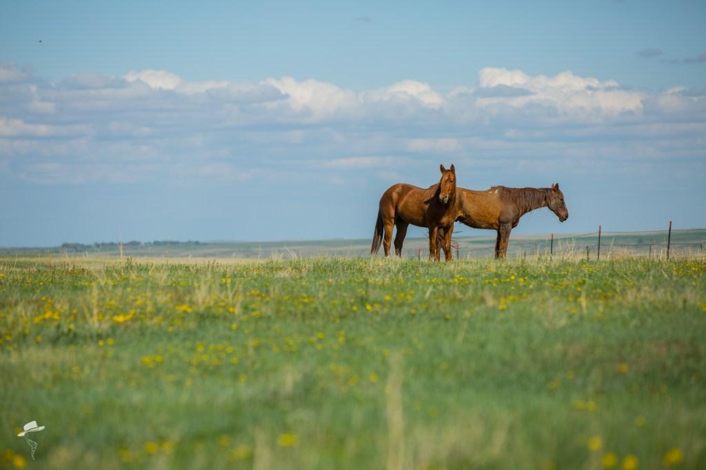 Gump, the south dakota cowgirl, south dakota cowgirl photography