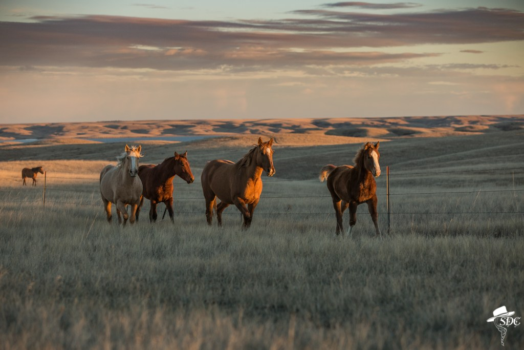 2019 South Dakota Cowgirl Calendar, South Dakota Cowgirl Photography, horses, horses at sunset, ranch horses