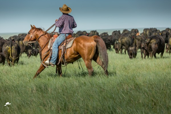 branding photo, south dakota cowgirl photography