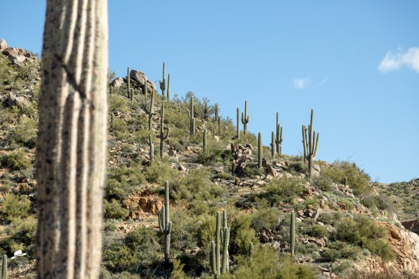 cactus, art of the cowgirl, tonto national forest