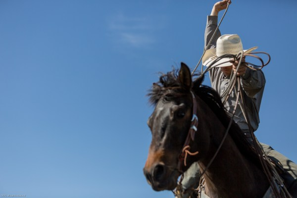 the south dakota cowgirl, south dakota photography, cowboy
