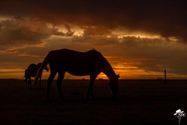 south dakota cowgirl photography, the south dakota cowgirl