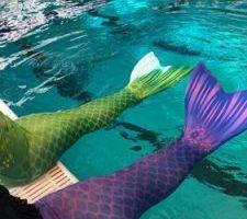 AquaMermaid School Review – Learn to Swim like a Mermaid