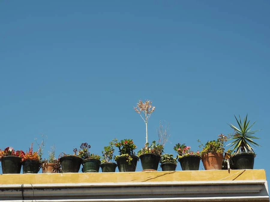 Decorative plant pots seen on the streets in Oaxaca City, Mexico. | via The Spirited Violet