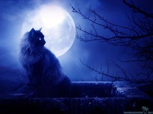 fullmoon-you-can-find-black-cat-at-full-moon-in-many-resolution-such-82325