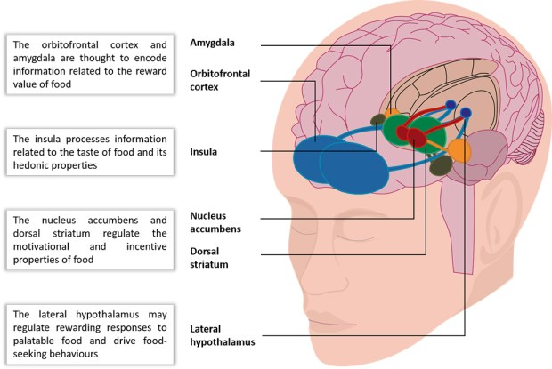 Figure 2. Areas of the brain