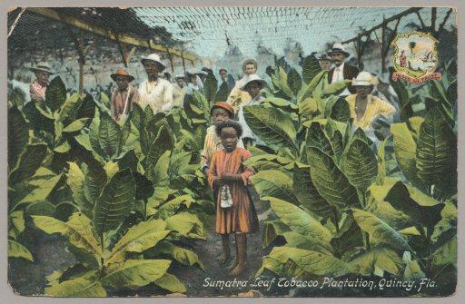 Tobacco3(2)