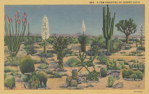 DesertCacti