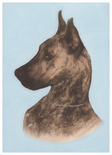 Chien(Portrait)400 copy