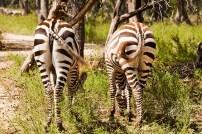 ZebraButts