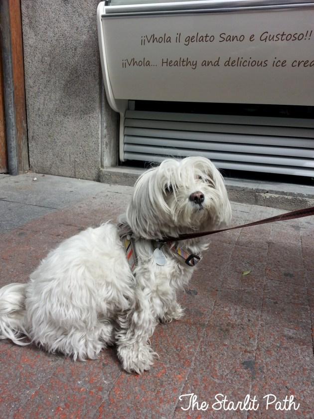 Madrid Dogs