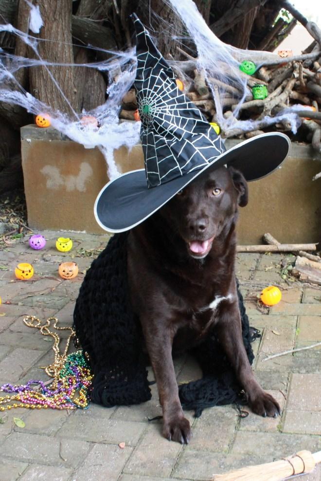 Halloween animal dress up ideas!