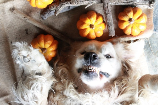 Halloween animal dress up ideas