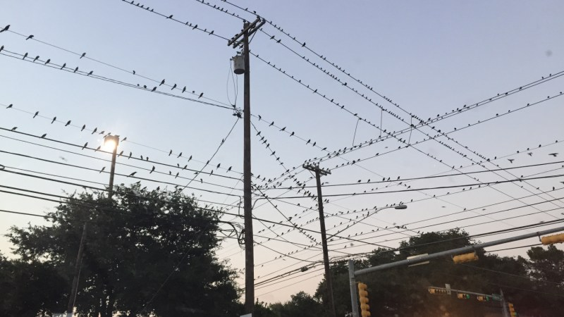 Photo: South Congress Grackles, Austin