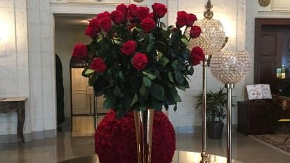 Fresh roses in D.C.