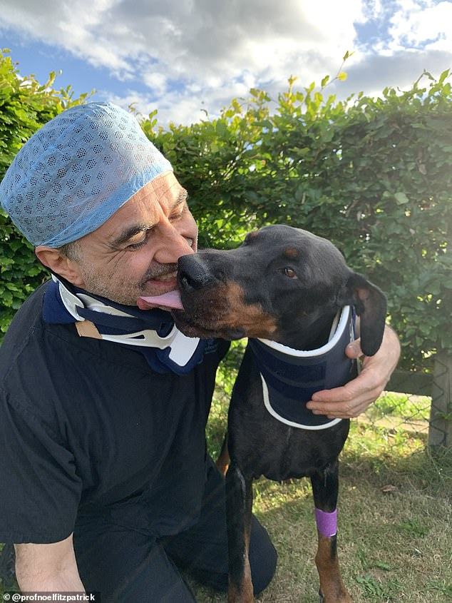 Noel and his patient odin the doberman in their neck braces – for both of them, their spinal injuries could have been fatal