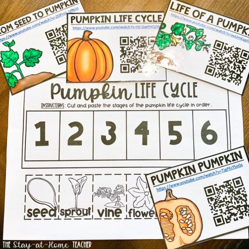 Pumpkin Life Cycle FREEBIE
