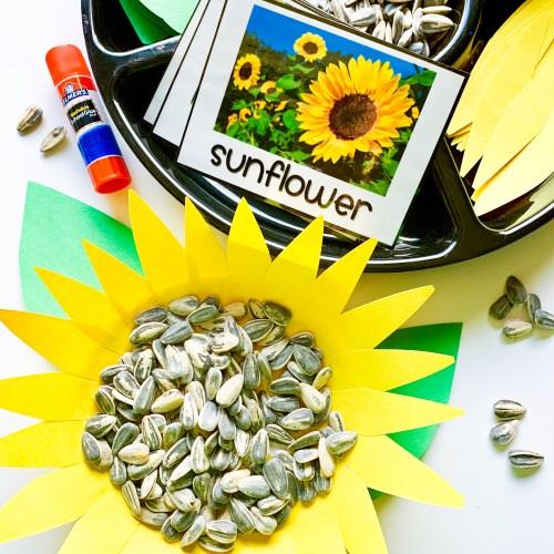 Sunflower6